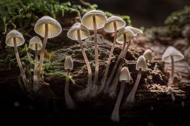 Grupo de fungos que crescem de um tronco com musgo
