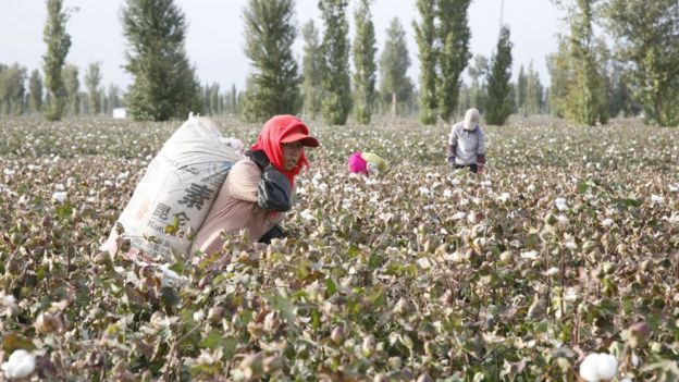 a cotton field in Xinjiang in 2010