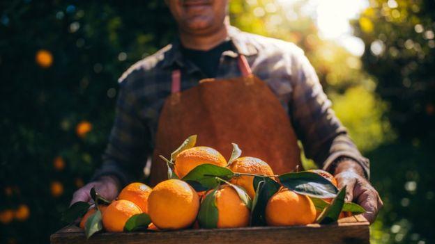 homem plantação de laranja