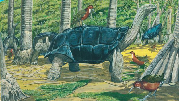 Pintura de Julian Hume, ilustrando los rálidos de garganta blancajunto a tortugas gigantes