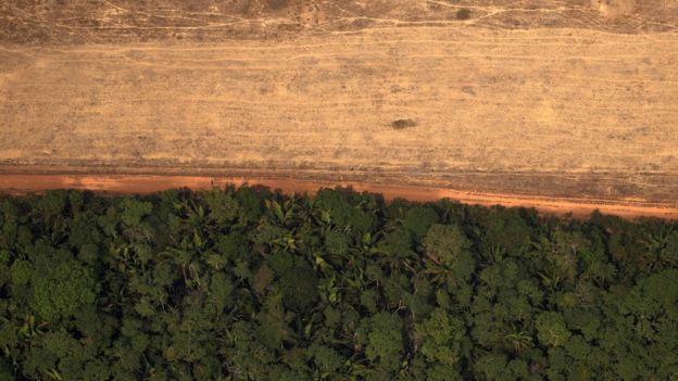 Imagem aérea mostra metade coberta de floresta, metade desmatada