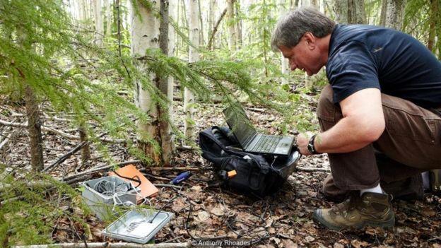 Vladimir Romanovsky coleta os registros de temperatura abaixo do solo da floresta