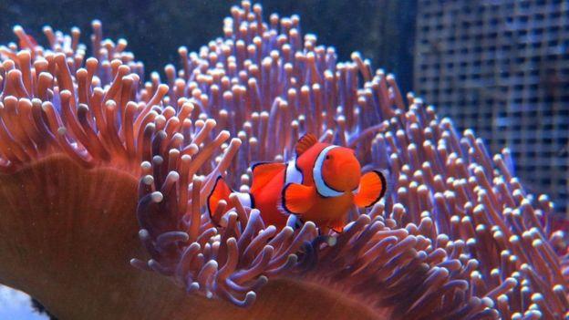 Coral reef,