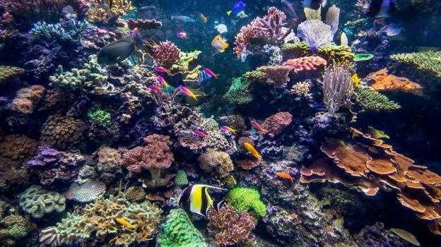 ماهیهایی که در میان این آبسنگهای مرجانی شنا میکنند خیالشان راحتتر از عروسهای دریایی یا ژلهماهیهاست