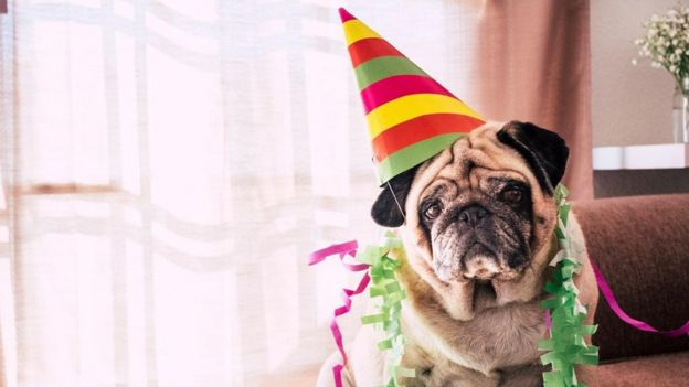 Perro celebrando su cumplea�os.