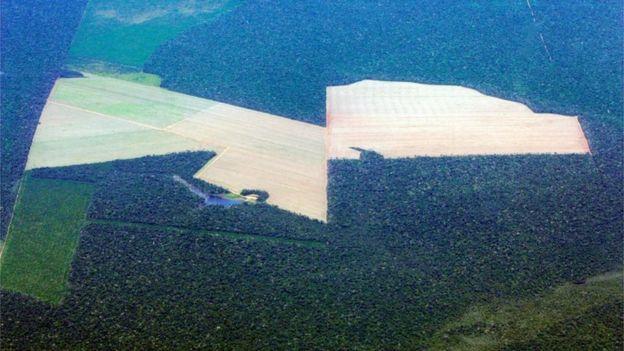 Área de plantio de soja no Mato Grosso