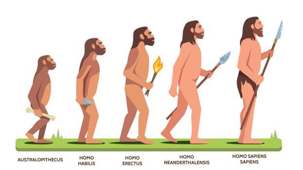 Ilustración de la evolución humana desde Australopithecus