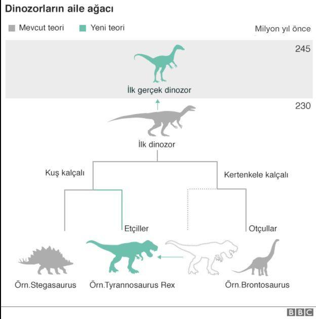 dinozor aile ağacı grafiği