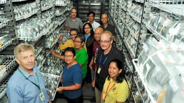 Banco de genes del IRRI con bolsas que contienen variedades de arroz y expertos que trabajan en ese centro