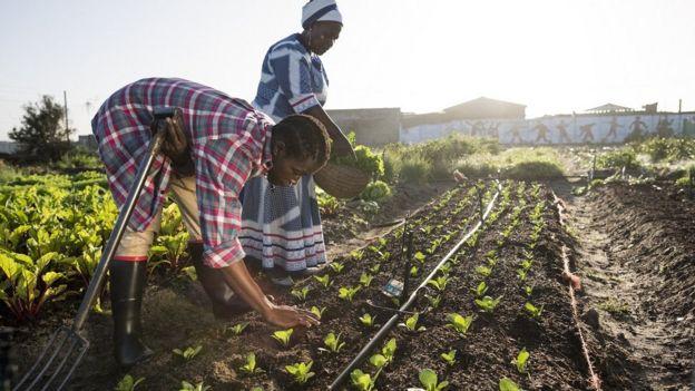 Afrika'da tarlada çalışan iki kadın