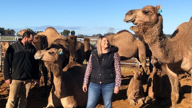 Would you drink camel milk? - BBC News