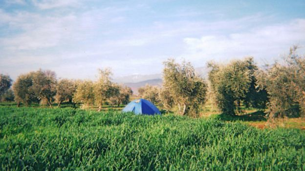 camping in an olive grove