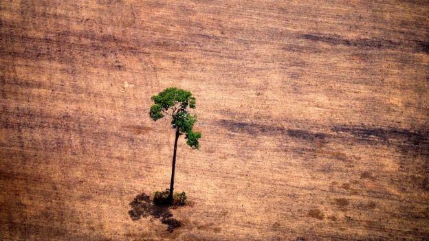 Tree felling in Brazil