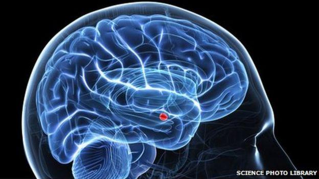 Amígdala no cérebro