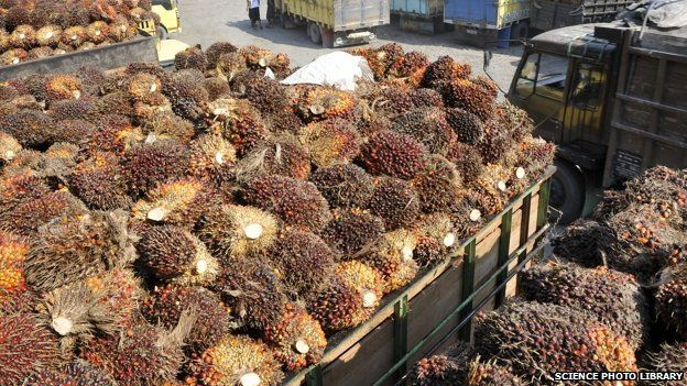 Harvested oil palm fruit at a processing facility in Sumatra, Indonesia