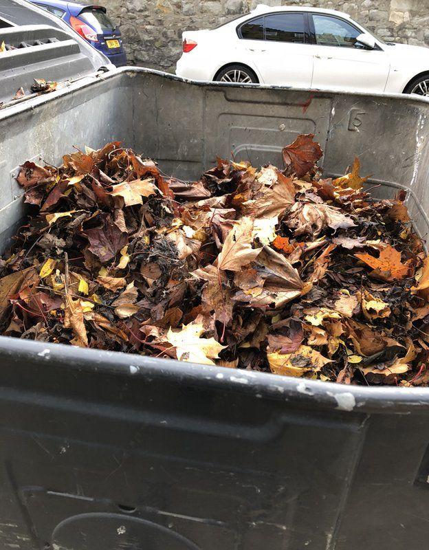 Garden waste in a communal landfill bin