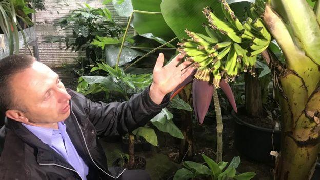Банани