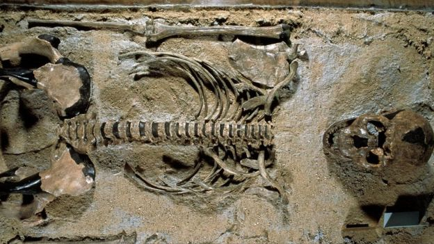 insan iskeleti