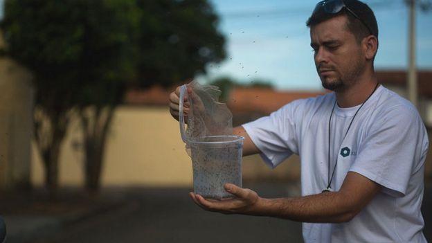 Un biológo en Brasil libera mosquitos para combatir el zika.