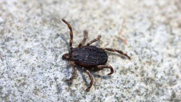 A modern-day tick from Spain