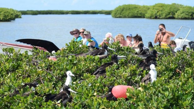 Tourists photograph frigatebirds in Codrington Lagoon