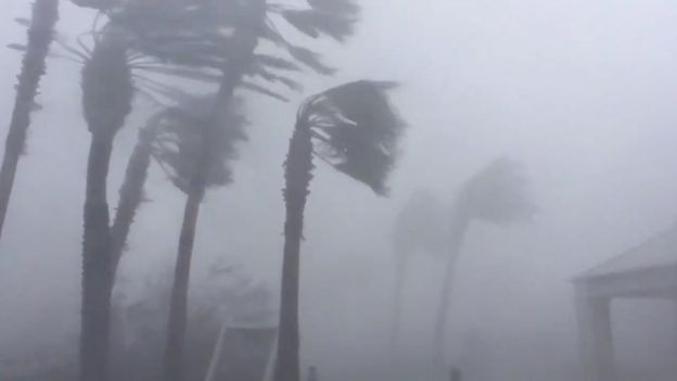Palm trees are seen during a Hurricane Michael in Panama City, Florida