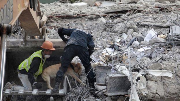 Búsqueda de sobrevivientes con perro rastreador entre los escombros de la Ciudad de México