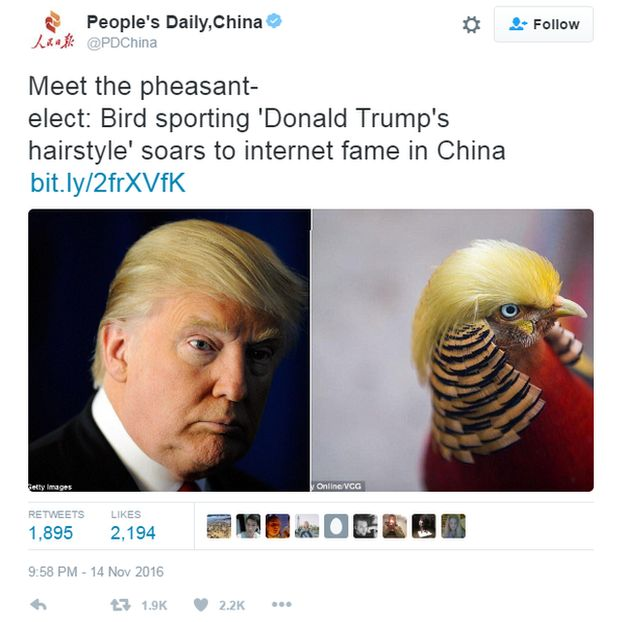 The bird with Trump like hair