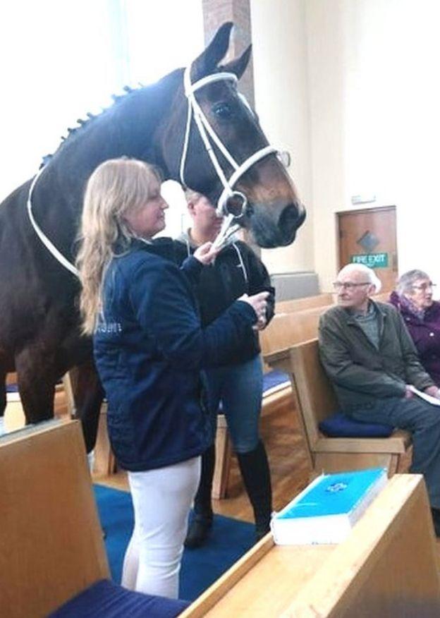 Olly horse