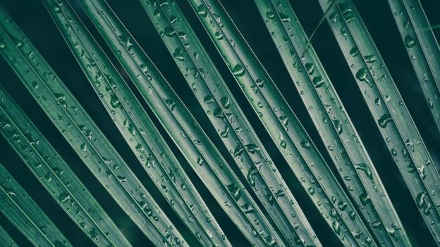 Gotas de água sobre folhas de palmeiras