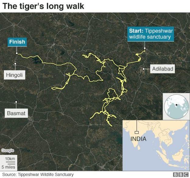 बाघ की यात्रा