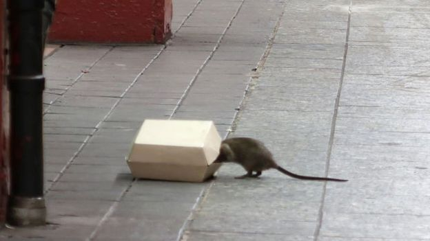 Крыса в метро Нью-Йорка