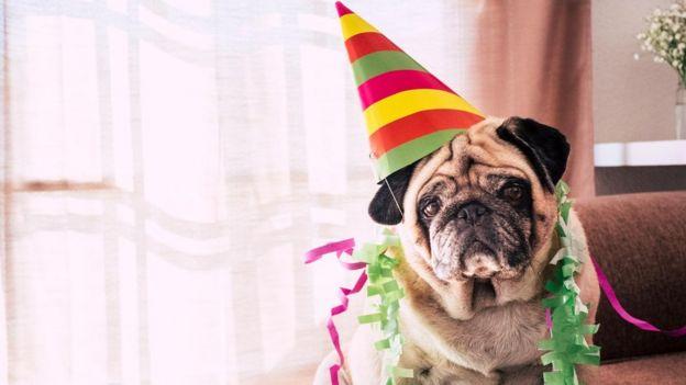 Cachorro com chapéu de aniversário