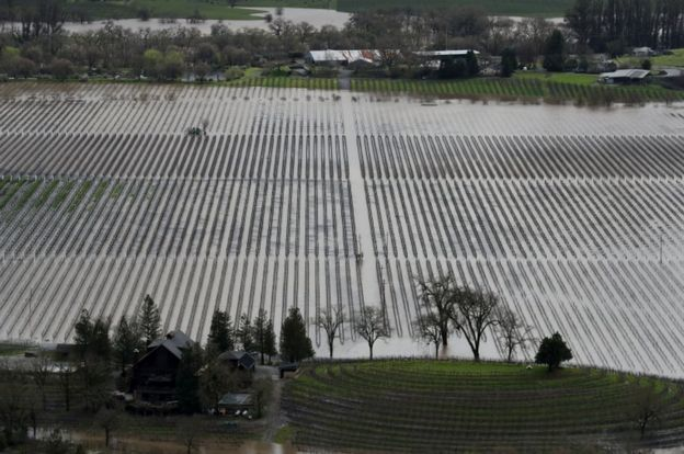 Grape fields are underwater in California's wine-producing region