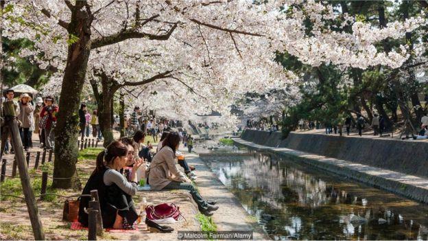 Pessoas sob cerejeiras
