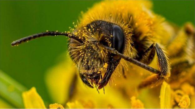 56 Gambar Binatang Pemakan Lebah Terbaru