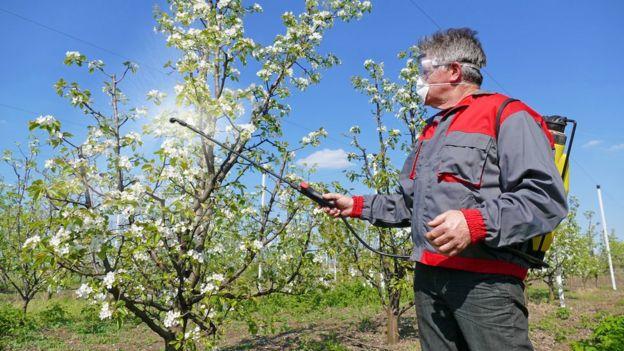Homens borrifando pesticida em pomar de maçãs