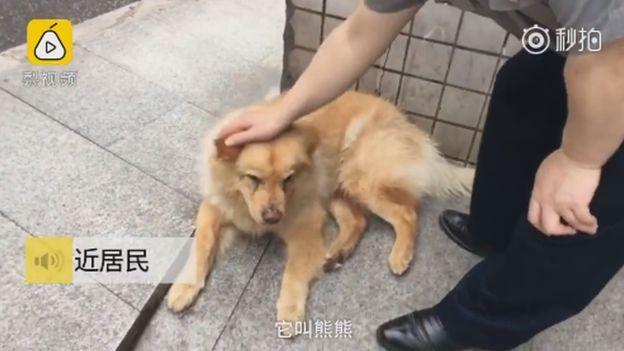 Xiongxiong menunggu majikannya di stasiun.
