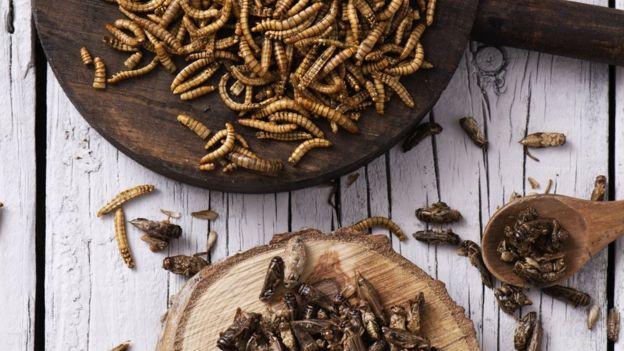 Duas tábuas com insetos espalhados