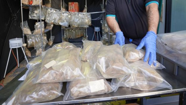 A police worker handles the seized drugs which are packaged in plastic bags