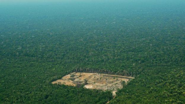Amazon ormanlarında tahrip edilen bir bölge