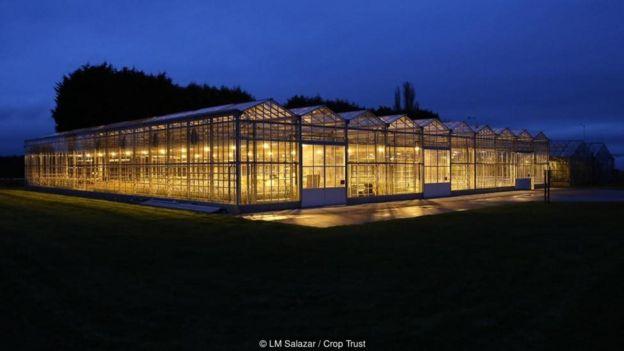 LM Salazar / Crop Trust