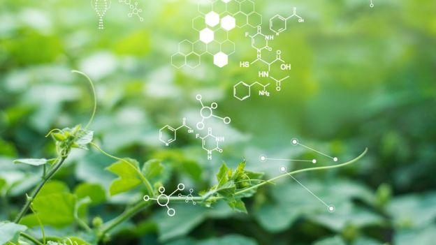 Plantas y química