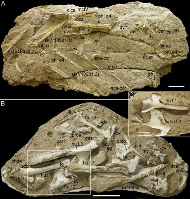 Rochas contendo restos do pterossauro Hamipterus tianshanensis na China