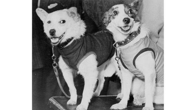 بيلكا وستريلكا ظلتا على قيد الحياة خلال رحلتهما في الفضاء ليُغدق عليهما الثناء بعد ذلك من مختلف أنحاء العالم Alamy