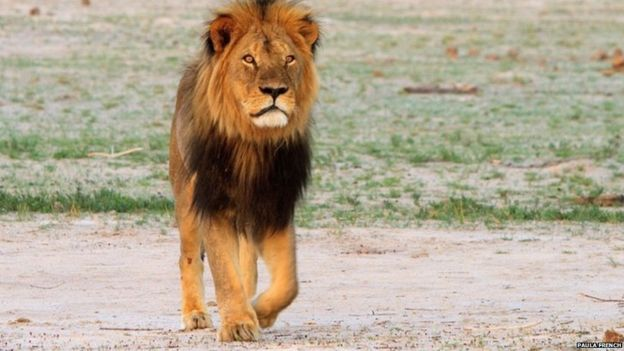 how do you transport a lion s head around the world news cecil the lion