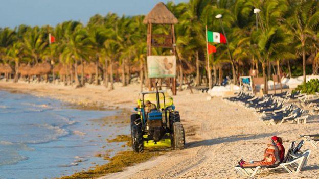 Imagem mostra trator passando por cima de sargaço e pessoas sentadas em cadeiras na beira da praia, no Caribe, em 2015