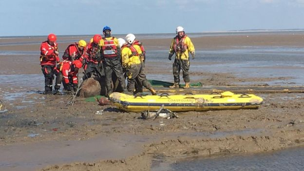 Horses rescued by after being stuck in thick mud on Moreton Beach