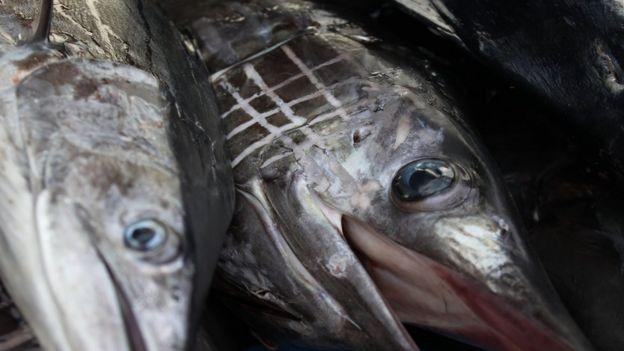 Dois peixes espadarte expostos à venda