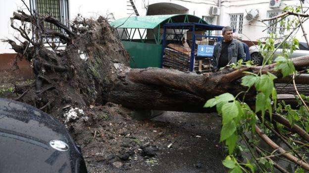 Поваленное дерево во дворе